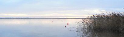 the lake de Lacanau in the morning / le lac du Lacanau au matin